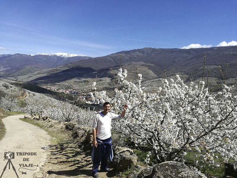 Cerezos en flor volviendo de las Nogaledas