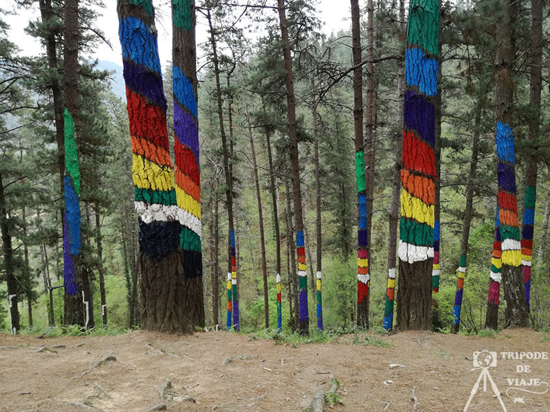 Árboles pintados en el bosque de Oma.